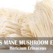 Lion's Mane Mushroom extract improves memory