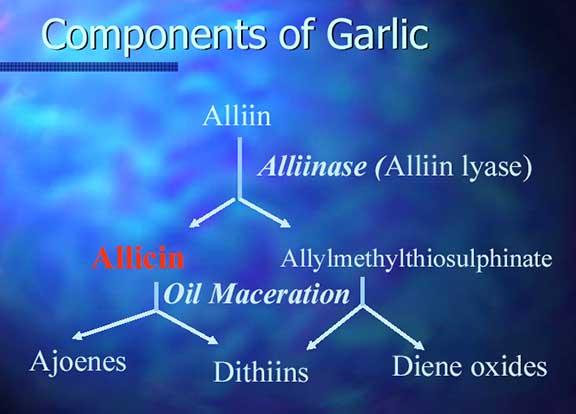 garlic extract active ingredients