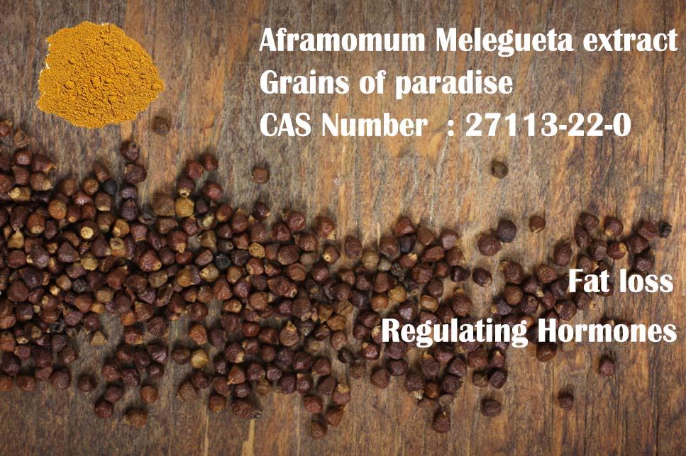 Aframomum Melegueta extract 6-paradol