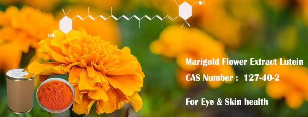 lutein supplement eye health