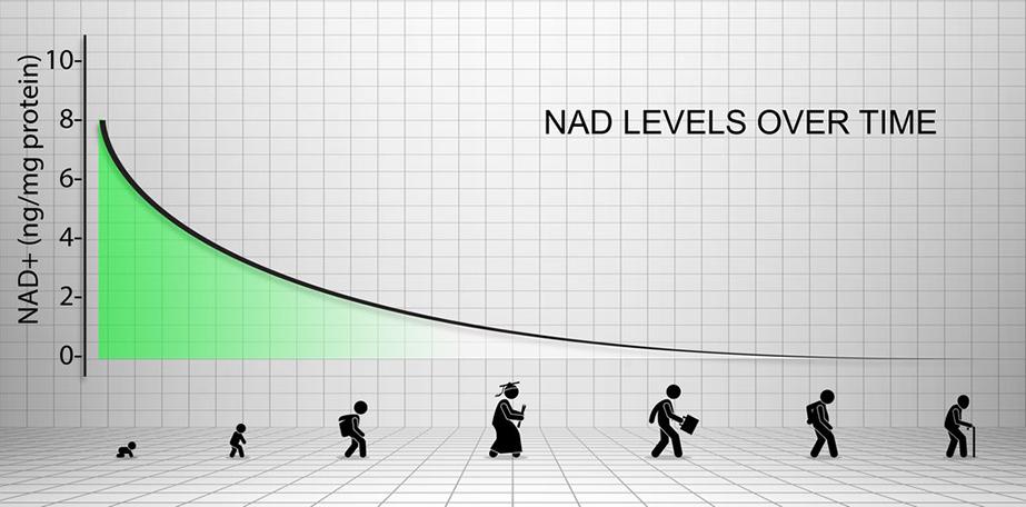Nicotiamide Riboside NAD Precursor