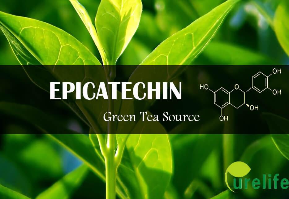 epicatechin green tea