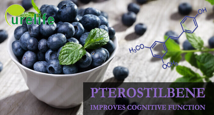 Pterostilbene improves cognitive function