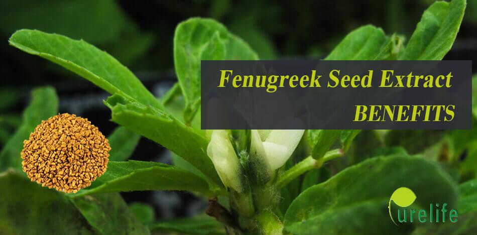 Fenugreek Seed Extract benefits