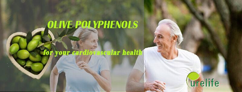 Olive polyphenols