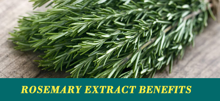 Rosemary extract benefits